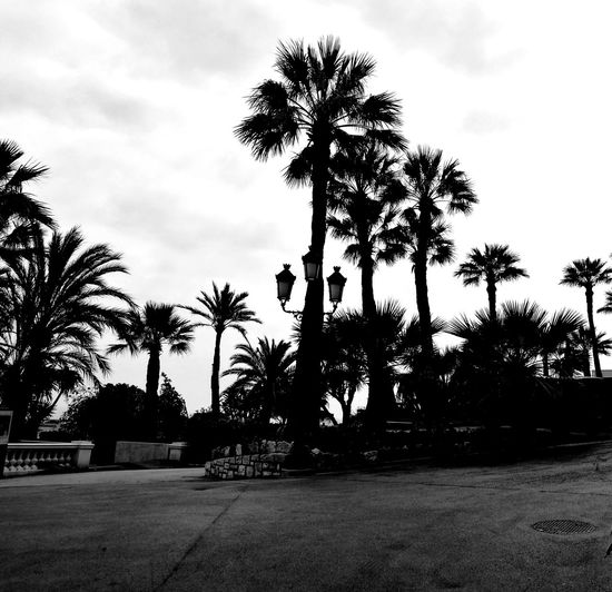 Palm Tree Silhouette Monaco Contrast Outdoors Beauty In Nature No People Black & White