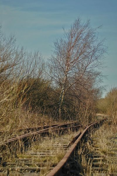 Beauty In Nature No People Nature Outdoors Tree Sky Tranquility Day Railway Track Derelict & Abandoned Fleetwood Lancashire UK