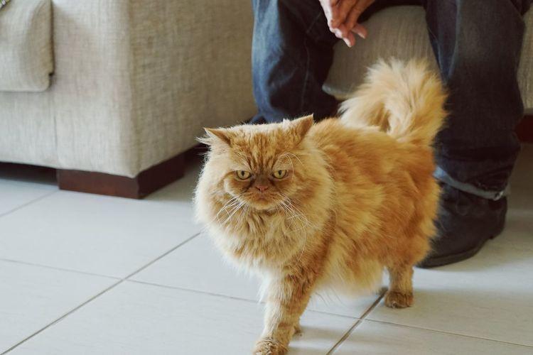 Cute cat indoors