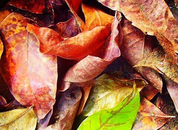 Leaves Outdoors No People Beauty In Nature Landscape Close-up Autumn Multi Colored Leaf Day Fragility Change Rock - ObjectNature Plant Scenics First Eyeem Photo EyeEmNewHere