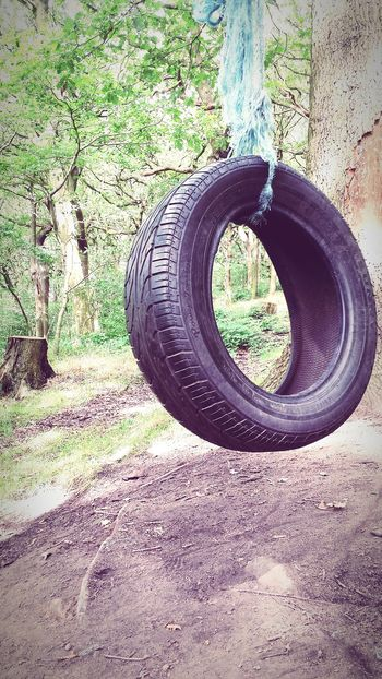 Lifestyle Play Active The Great Outdoors - 2015 EyeEm Awards WoodLand Tyre Swing Trees Tyre This Week On Eyeem Playground