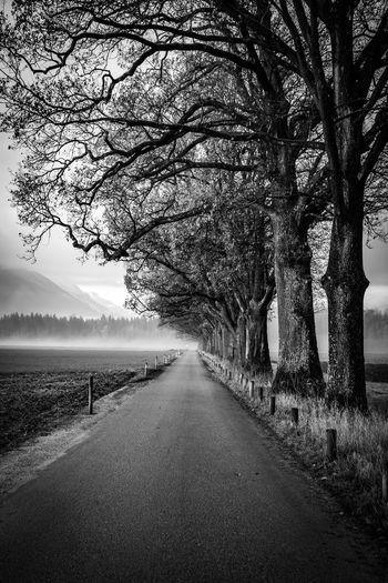 Empty road along bare trees