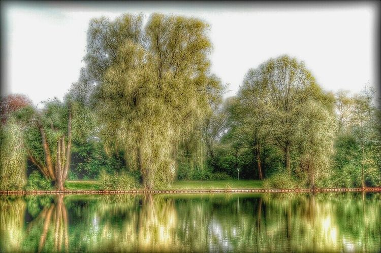 Water Reflections Trees Berlin Mariendorf