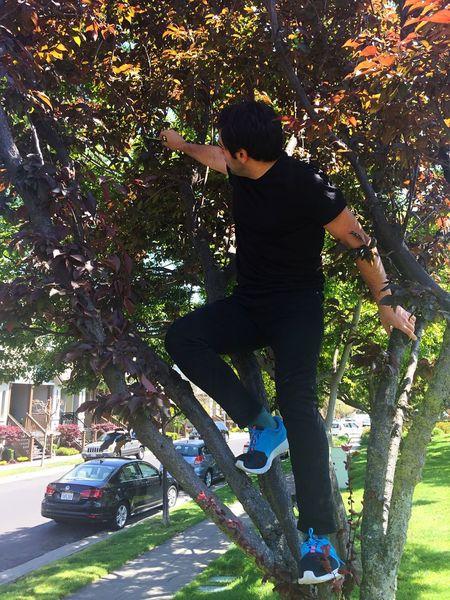 Matreeas. Trees Drone