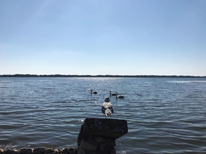 Fogliano Lake Water Sky Sea Nature Copy Space Clear Sky Real People Scenics - Nature Beauty In Nature Rippled Day Tranquil Scene Outdoors Waterfront Men Leisure Activity One Person Lifestyles Tranquility