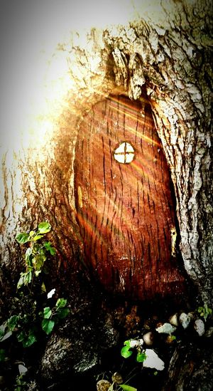 """Whoa...what is that? In the Tree Trunk over there? Is it a Portal to a Magical Place? A Doorway to Gnomes Home maybe? Possibly even an Entrance to the Enchanted Forest? The Possibilities Are Endless. I'm filled eith Amazement And Wonderment, my Imagination filling in the blanks with its own endless possibilities..."