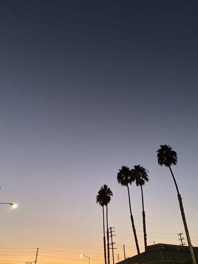 Nice sky Palm
