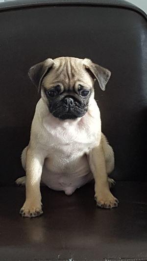 One Animal Domestic Animals Animal Themes Dog Chien