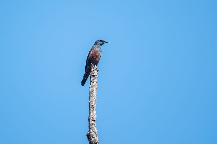 Low angle view of bird perching on pole against blue sky