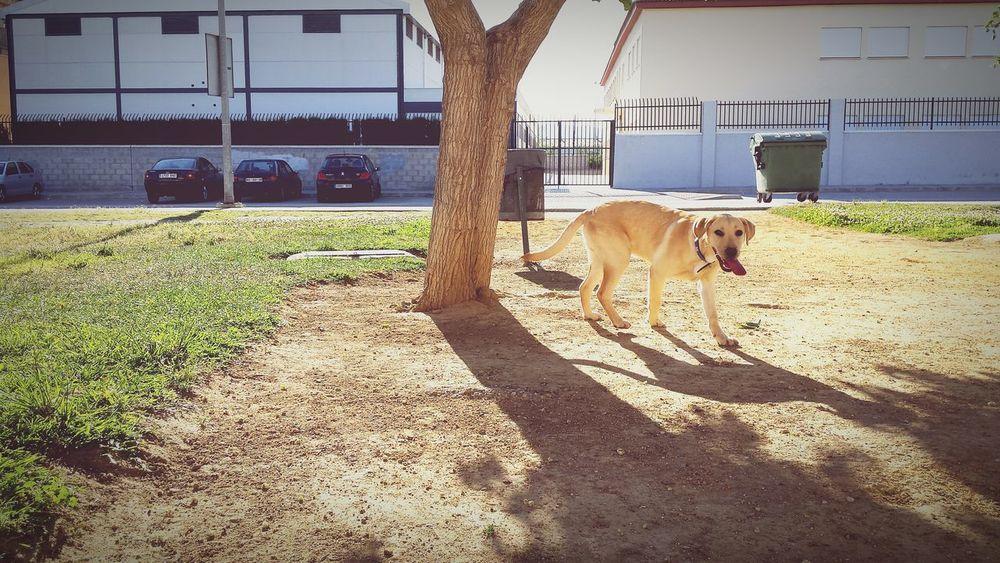 Dexter Perro Belleza Canina