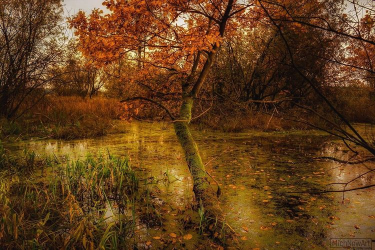 Tree Nature Forest Autumn Tranquility Tranquil Scene Water Reflection Swamp Beauty In Nature Scenics No People Branch Lake Day Marsh Landscape Leaf