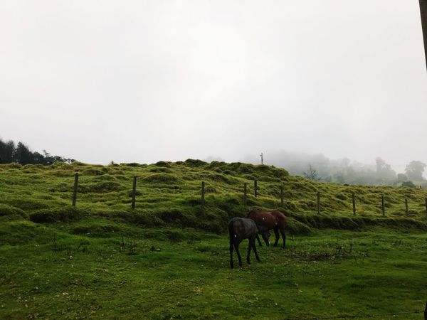 Horse Turrialba Volcano Cartago,Costa Rica Rainy Days Beautiful Days