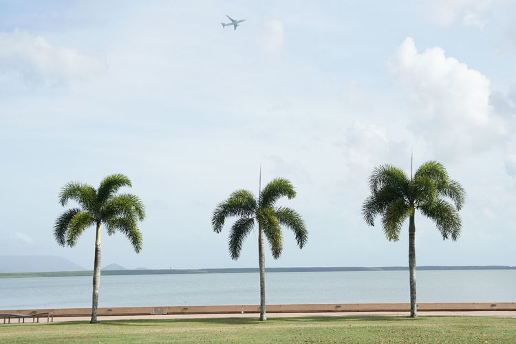 Palm trees at beach against sky