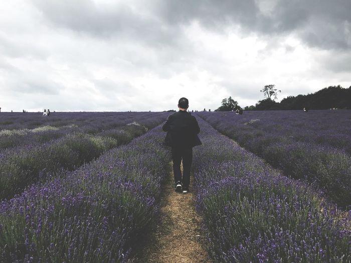 Rear View Of Young Man Walking At Lavender Farm