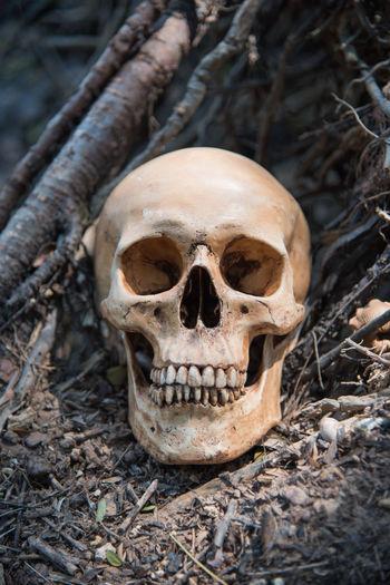 Crime Halloween Halloween Horrors Halloween_Collection Nature Skull And Bones Amazon Bone  Dead Die Halloween Makeup Scary Skull Skull Art Skull Face Skull Mask