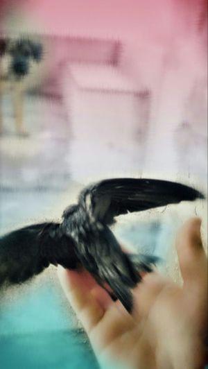 Vuela Freebird
