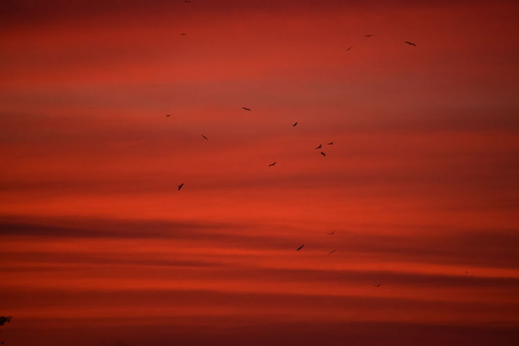 evening beauty... NIKON D5300 Nikon Photography Nikonphotography Nikon Photography No People Nikond5300 Capture Tomorrow Red Flock Of Birds Silhouette Mid-air Sky Only Fly