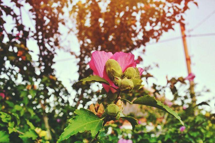 InstaDimka Imagination Flower