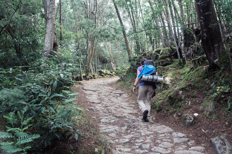 Threeweeksgalicia Hiking Hikingadventures Journey Tree Forest Plant Land Walking Rear View Full Length Leisure Activity Nature Growth One Person Real People Backpack Lifestyles Day Activity Men Footpath WoodLand Outdoors My Best Photo