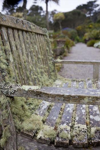 Bench Green Path Weathered Garden Moss Old Tresco Tresco Abbey Gardens Tropical Wet