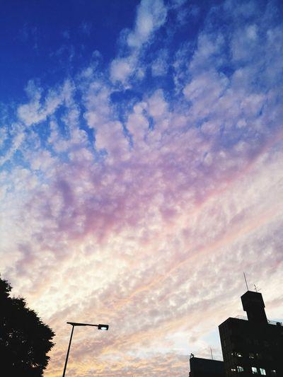 夕陽 Sunset Cloud - Sky Sky Low Angle View Japan 日本 Osaka City 夕焼け空 天王寺
