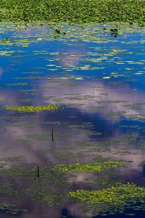 Cloud Lake Lotus Lotus Flower Nature Water Surface 伊豆沼