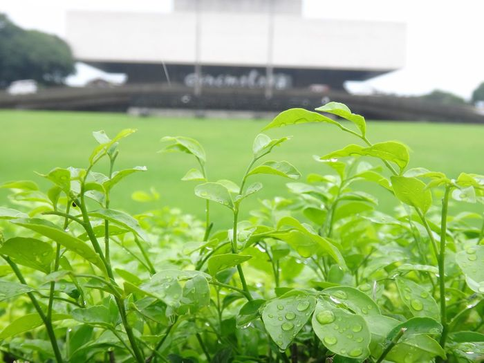 Growth Green Color Leaf No People Plant Nature Focus On Foreground Outdoors Day Field Close-up Freshness Grass Beauty In Nature Tree Sky Eyeem Philippines