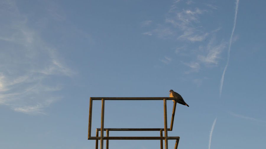 Low Angle View Of Bird Perching On Metallic Structure Against Blue Sky