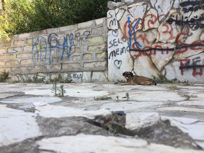 Graffiti Built