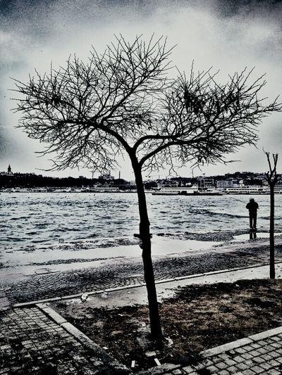 Relaxing Sea Landscape Trees Seaside Enjoying Life Eye4photography  Bisgen KCe