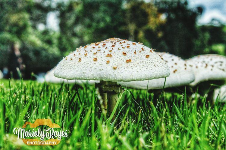 Hongos  TeamCanon Nature Photography Practicandofoto Photgraphylove Fotografia Belleza Natural