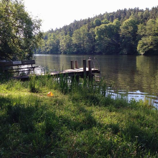 Summer Forest Lake Vscocam