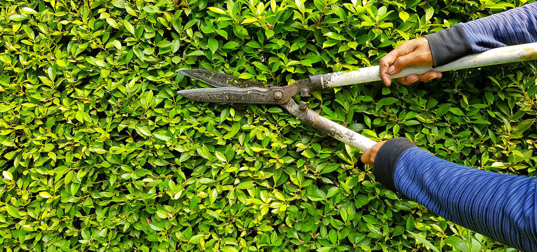 High angle view of person working on plants