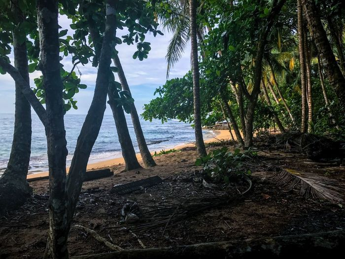 Been There. Costa Rica Tree Tree Trunk Nature Tranquility Beach Beauty In Nature Sea Scenics Tranquil Scene Outdoors Growth Water Landscape Day No People Travel Destinations Branch Forest Sky Palm Tree Caribbean Travel Oceanfront