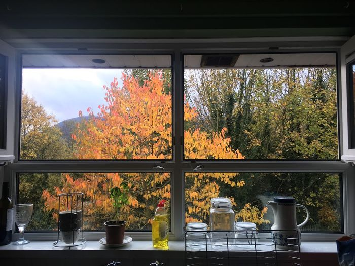 A Room with a view Glass - Material Tree Plant Transparent No People Indoors  Autumn Nature Day Sunlight Sky