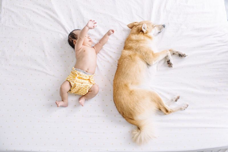 High Angle View Of Baby Sleeping By Dog On Bed