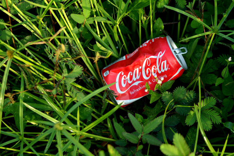 Coca Cola can Popular Photos Can Drink EstaBlished Text Western Script Green Color Growth Sign Plant Nature Capital Letter Day Information
