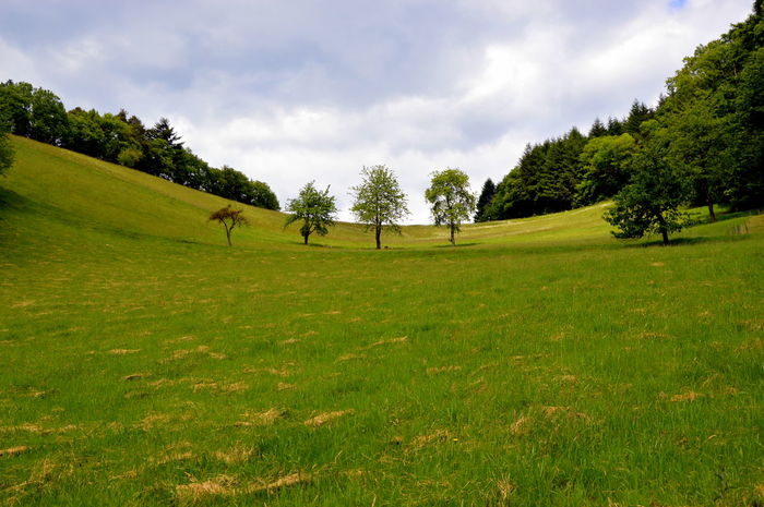 EyeEm Nature Lover EyeEmNewHere Without Special Lens Angle Beauty In Nature Black Forest Day Field Fisheye Germany Grass Green Color Growth Hiking Trail Landscape Nature No People Olefingirl Outdoors Scenics Seasons Sky Tranquil Scene Tranquility Tree