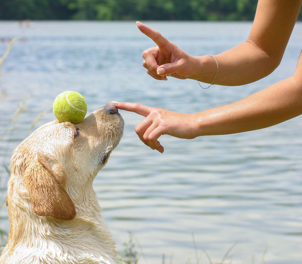 Cropped hands of woman touching dog in lake