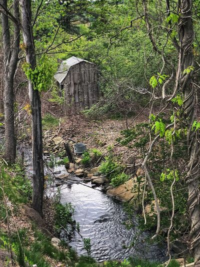 Wooden Shed in the Wilderness Plant Water Tree No People Nature Day Full Frame Beauty In Nature Green Color Outdoors Growth Tranquility Wet Forest Reflection Land Backgrounds