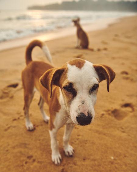 Dog looking away on beach