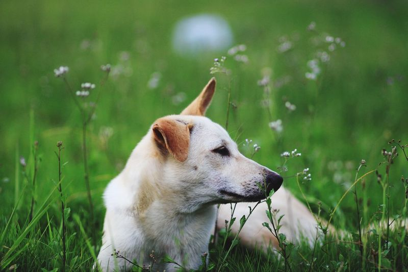 Close-Up Of Dog On Grass