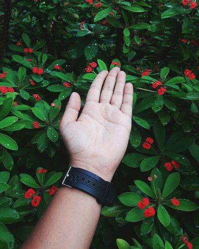 Flower Flower Head Human Hand Human Body Part One Person Green Color Outdoors People Freshness Hand Leaf Day Nature