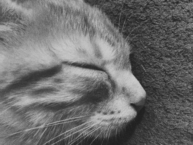 Cat Sleeping Cat Sleeping Cats Pets Gato