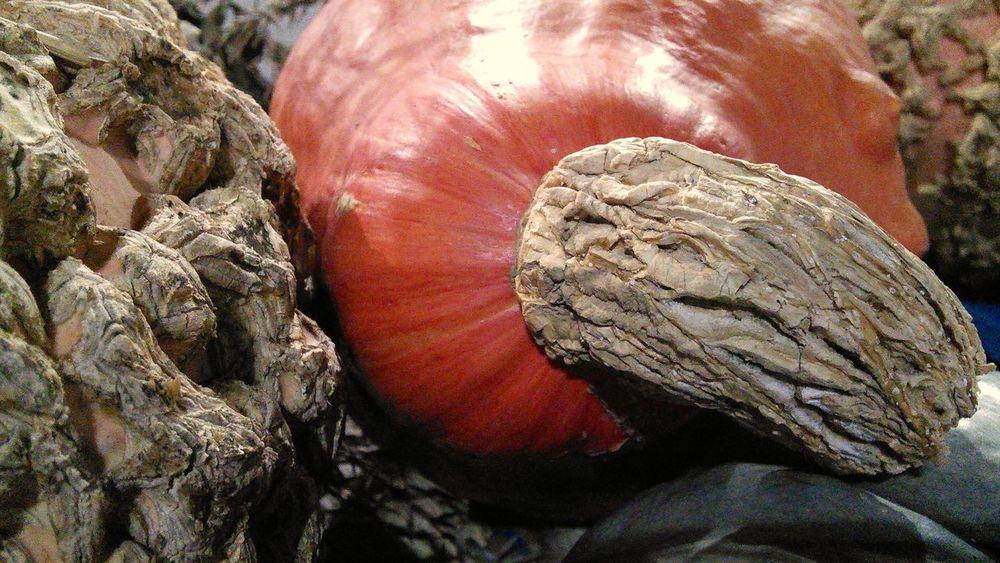 Textures And Surfaces Pumkins & Squash. Taking Photos Nature's Diversities