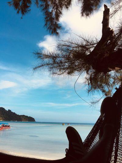 Water Sea Sky Beach Nature Tree Plant