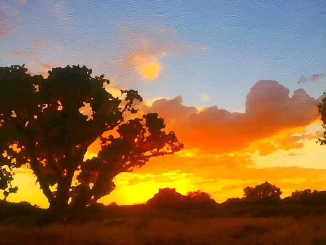 Sunset in Safford, Arizona Safford Sky Arizona Sunset Nature Nature Photography Beauty Beauty In Nature Light Mothernature Outdoor Photography Colors Trees And Sky Color Clouds