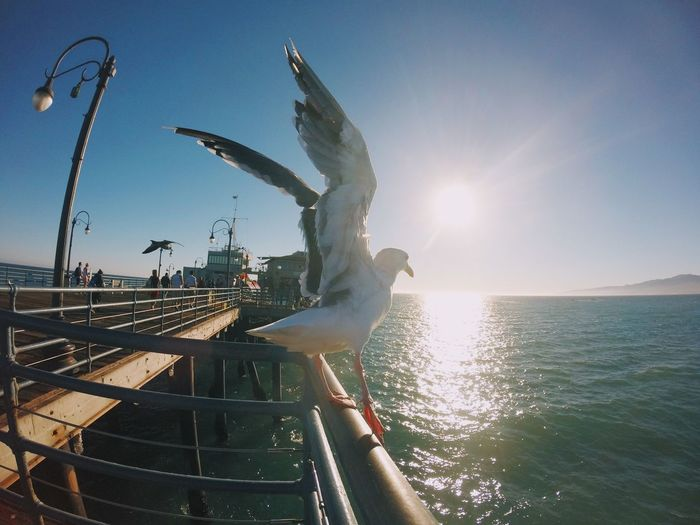 Seagull Perching On Railing At Santa Monica Pier Over Sea During Sunny Day