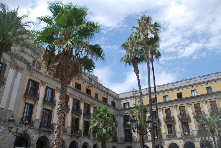 Architecture Barcelona Barcelona, Spain Building Exterior Built Structure Catalonia Catalunya City Cloud - Sky Day Growth No People Outdoors Palm Tree Residential Building Sky SPAIN Square Tree