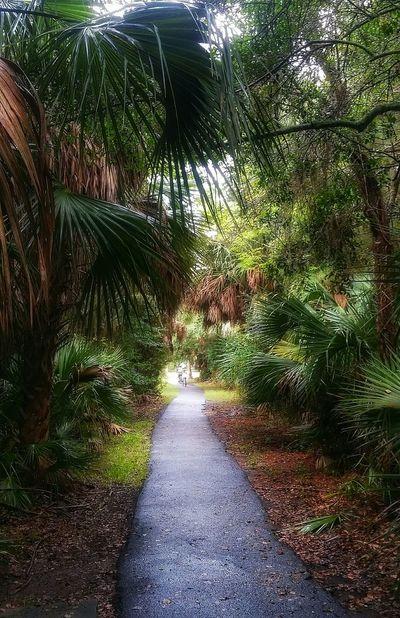 Island path 🗾 Beautiful Nature Gorgeous Day Living Life Palm Tree Islandlife
